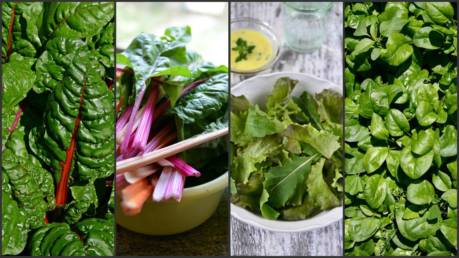 spenot mangold salata